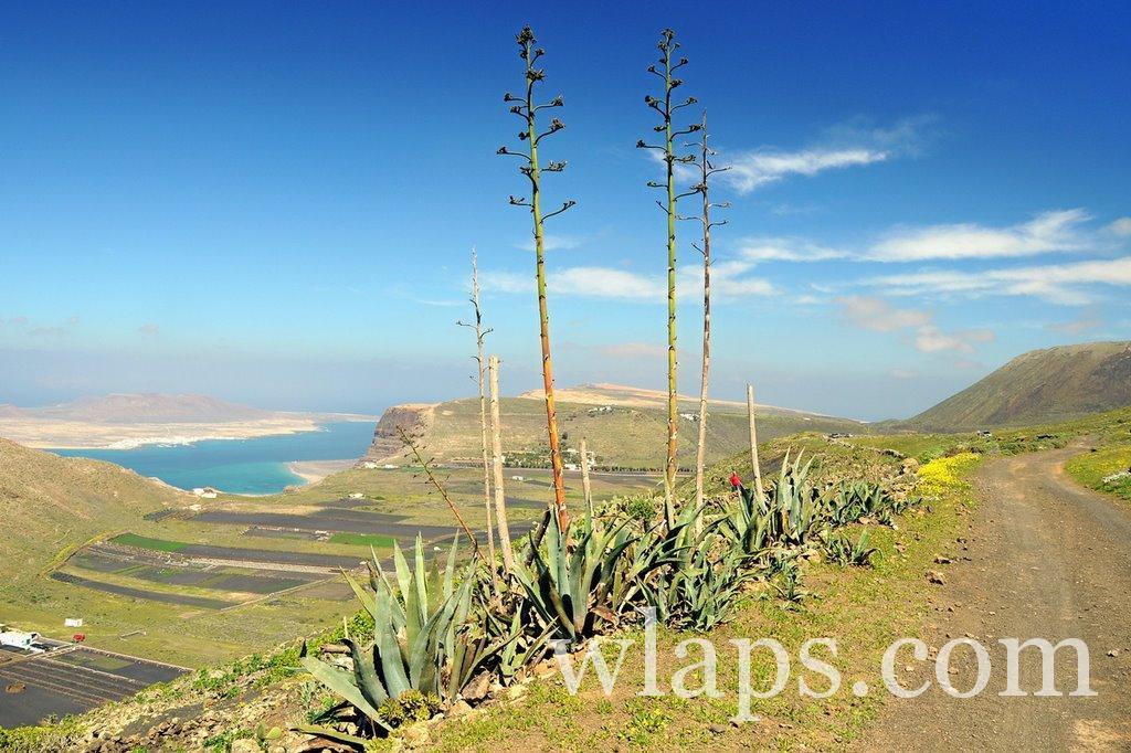 Lanzarote : Guide de voyage et informations pratiques