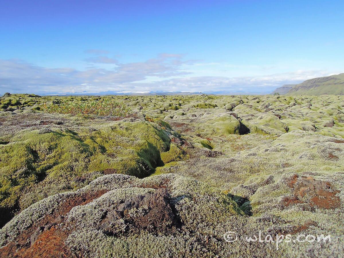 mousse-islande