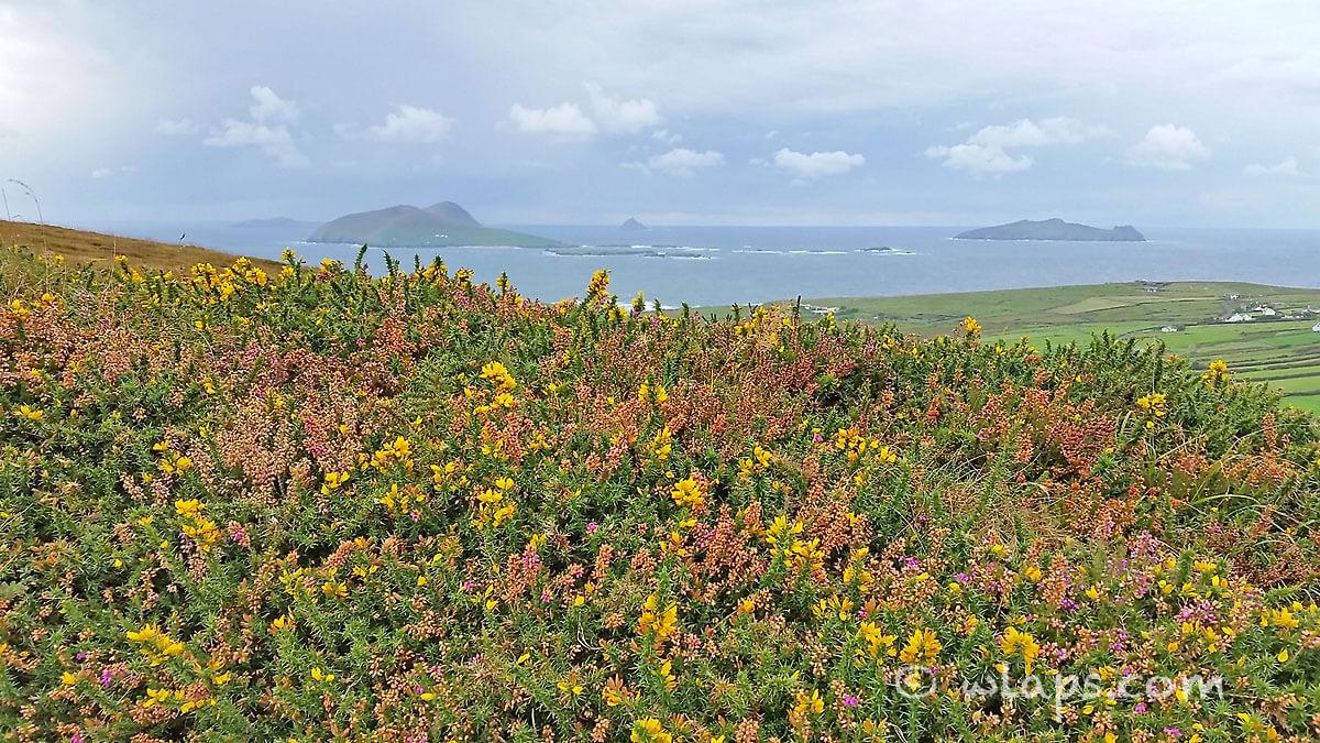 wild-atlantic-way-irlande-photos-5