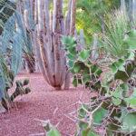 cactus-jardin-majorelle-carnet-voyage-maroc-marrakech