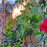 fleur-jardin-majorelle-carnet-voyage-maroc-marrakech