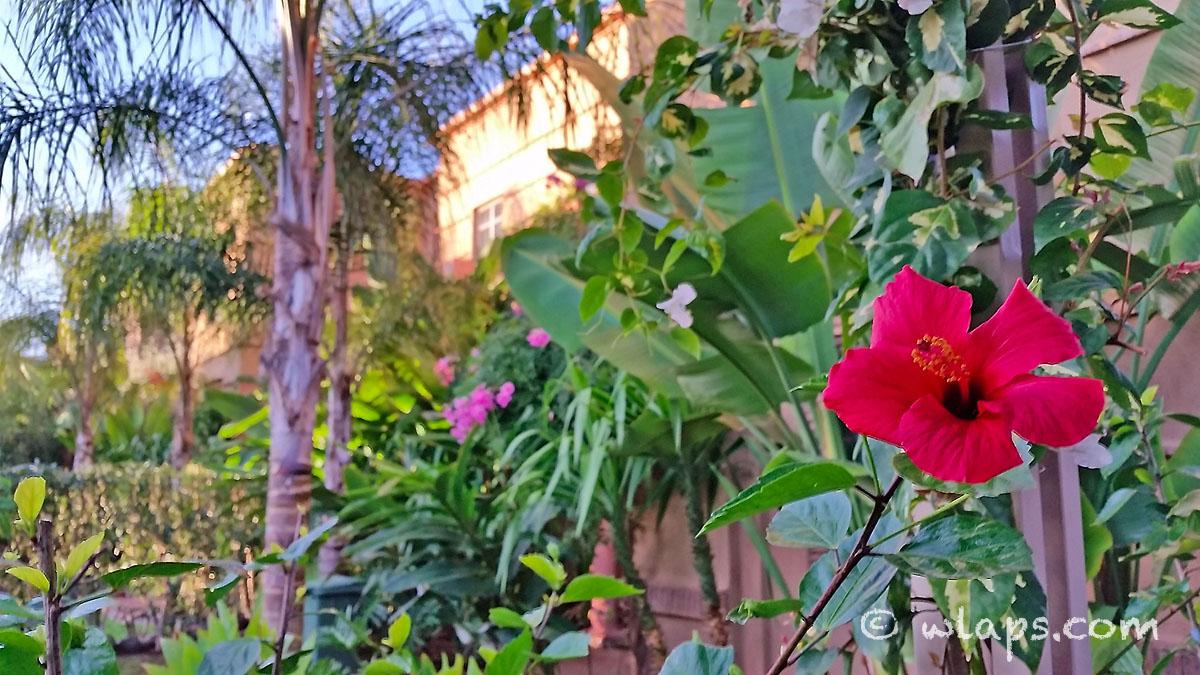 Carnet de voyage maroc au coeur de marrakech et de la for Fleurs de nos jardins