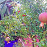 grenade-jardin-majorelle-carnet-voyage-maroc-marrakech