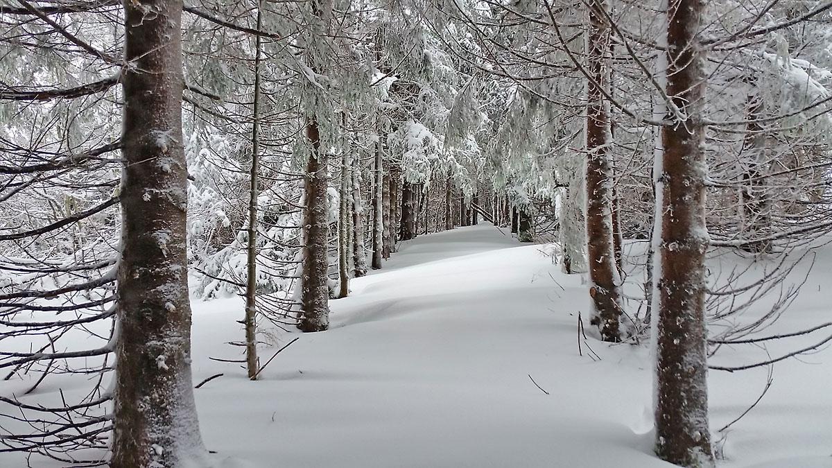 balade-photos-plateau-aubrac-neige-16