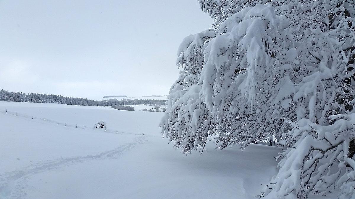 balade-photos-plateau-aubrac-neige-7
