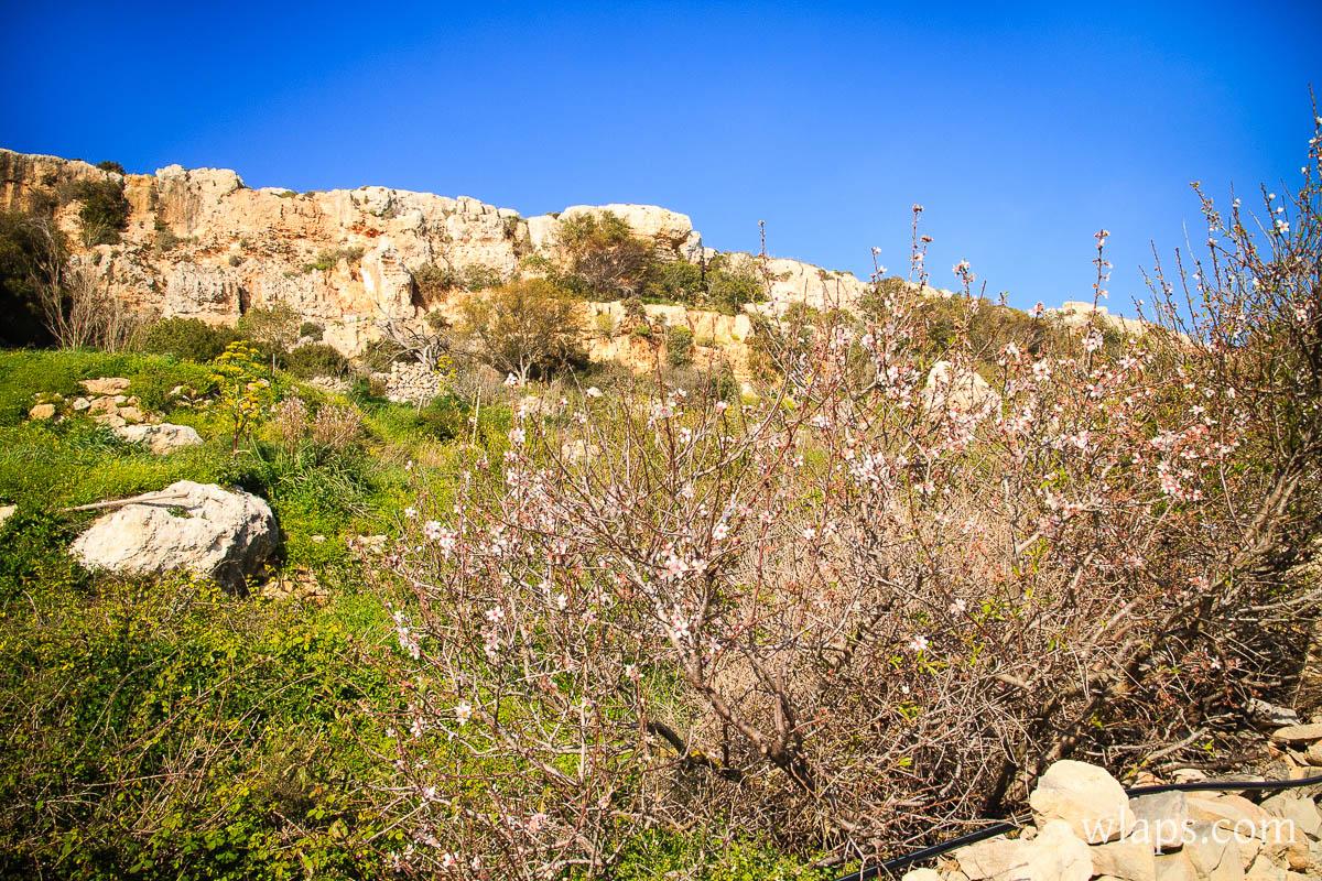 mars-malte-gozo-fleurs-voyage