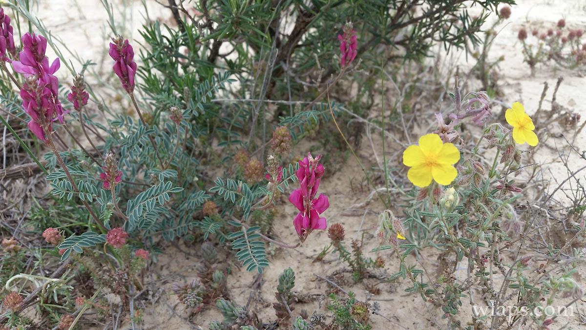 photo-desert-bardenas-reales-4