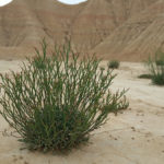 photo-desert-bardenas-reales-444