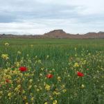 photo-desert-bardenas-reales-777