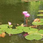1-le-jardin-botanique-deshaies-guadeloupe