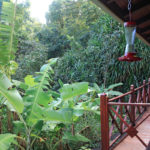 2-bungalow-ecolodge-arsenault-deshaies-guadeloupe-ecotourisme