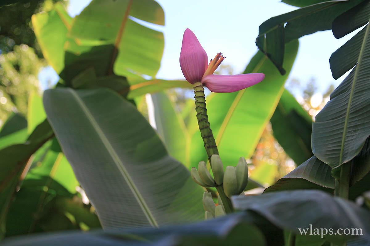 2-jardin-botanique-deshaies-basse-terre-guadeloupe