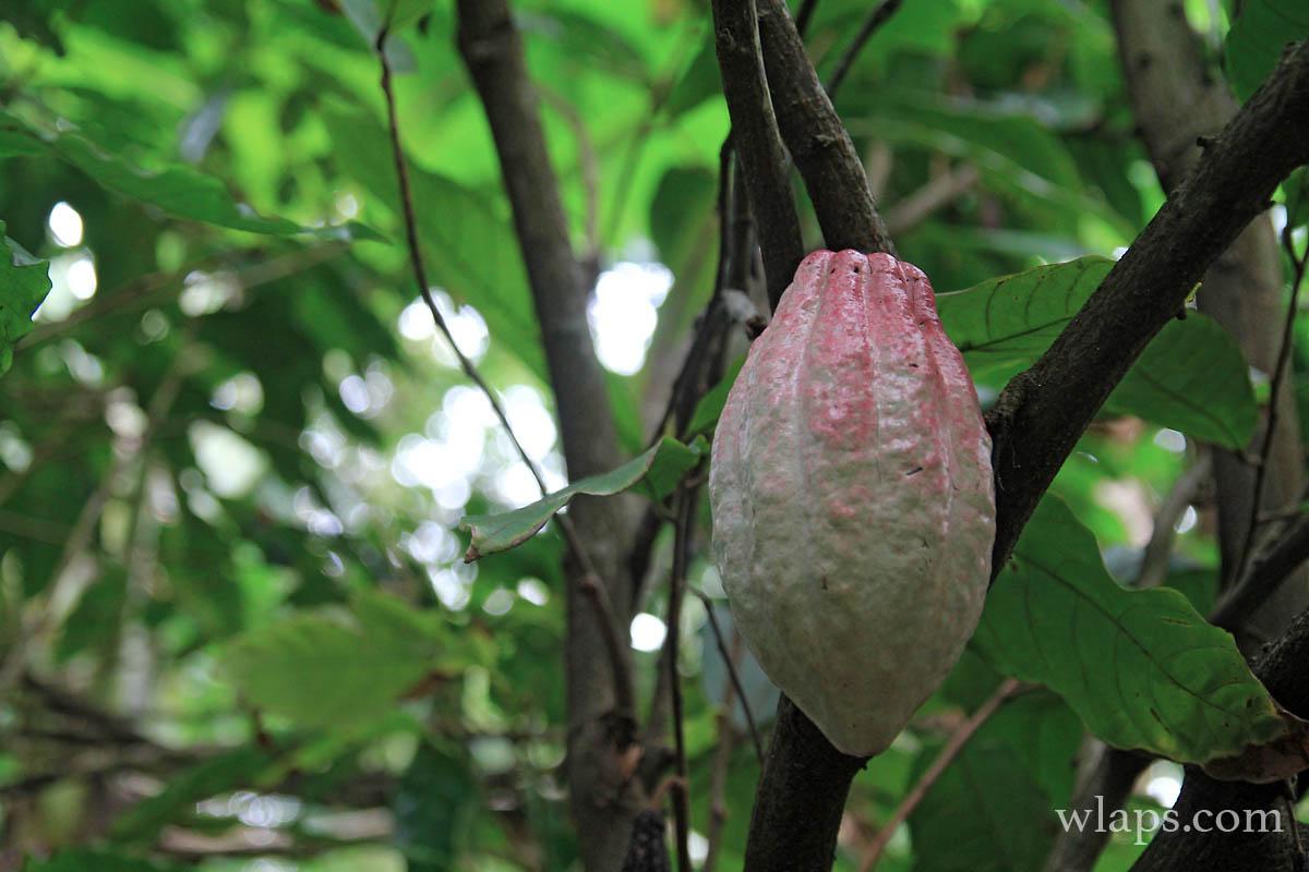 3-avis-domaine-vanibel-plantation-cafe-vanille-guadeloupe