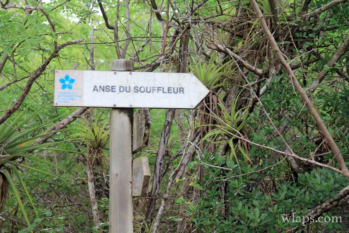 4-plage-anse-du-souffleur-grande-terre-guadeloupe