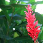 5-jardin-botanique-deshaies-basse-terre-guadeloupe