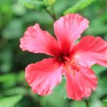 6-le-jardin-botanique-deshaies-guadeloupe