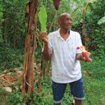 7-avis-domaine-vanibel-plantation-cafe-vanille-guadeloupe