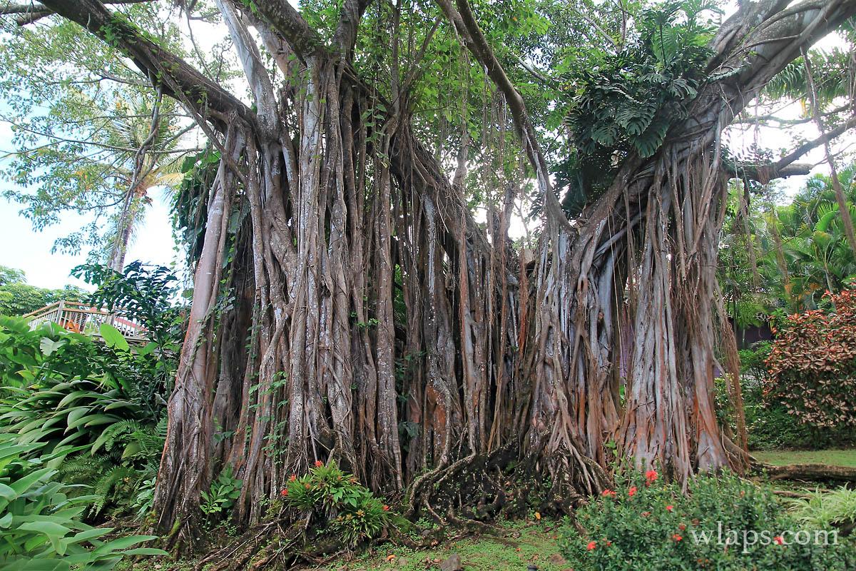 Jardin Botanique de Deshaies : cela vaut-il vraiment le coup de le ...