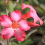9-le-jardin-botanique-deshaies-guadeloupe