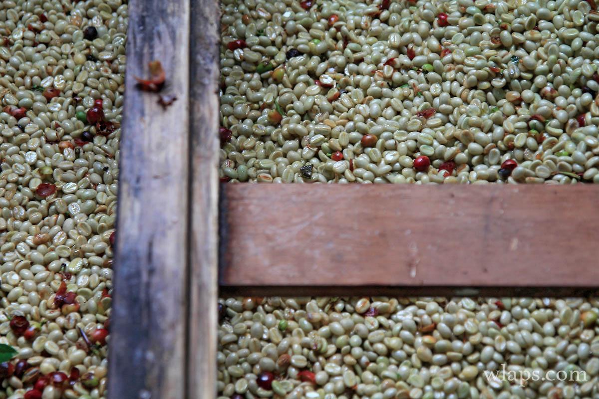 avis-domaine-vanibel-plantation-cafe-vanille-guadeloupe