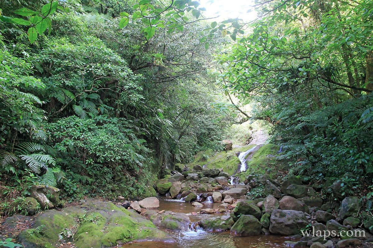 cascade-chute-du-galion-basse-terre-guadeloupe-3