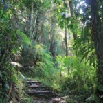 foret-humide-guadeloupe