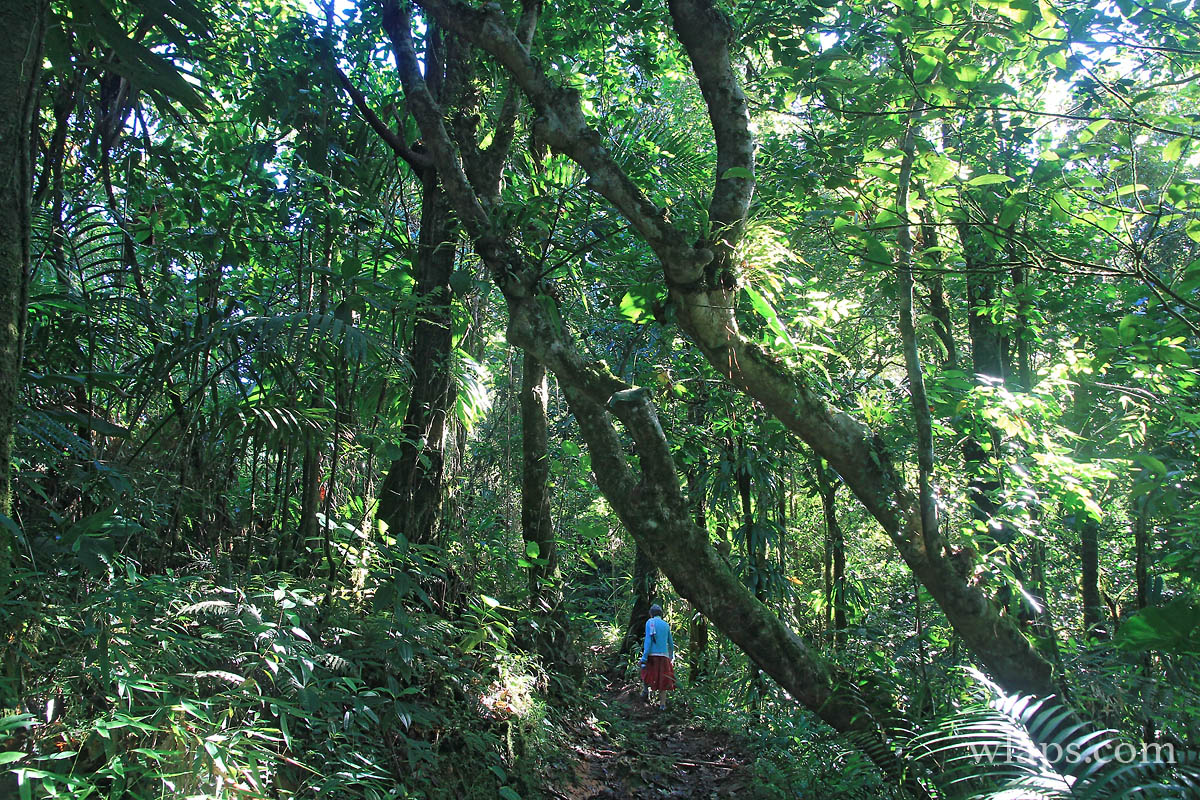 foret-humide-guadeloupe-basse-terre