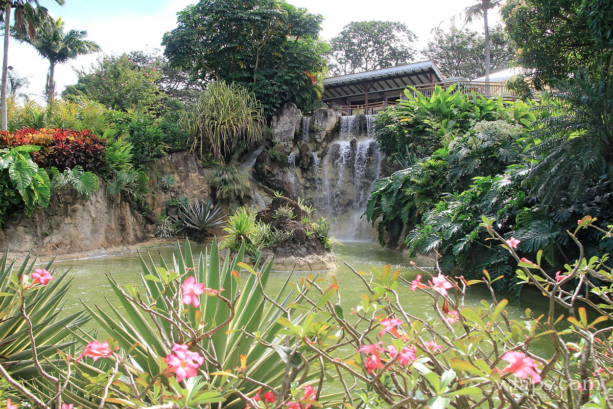 Jardin botanique de deshaies cela vaut il vraiment le for Au jardin des colibris guadeloupe