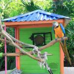 le-jardin-botanique-deshaies-guadeloupe