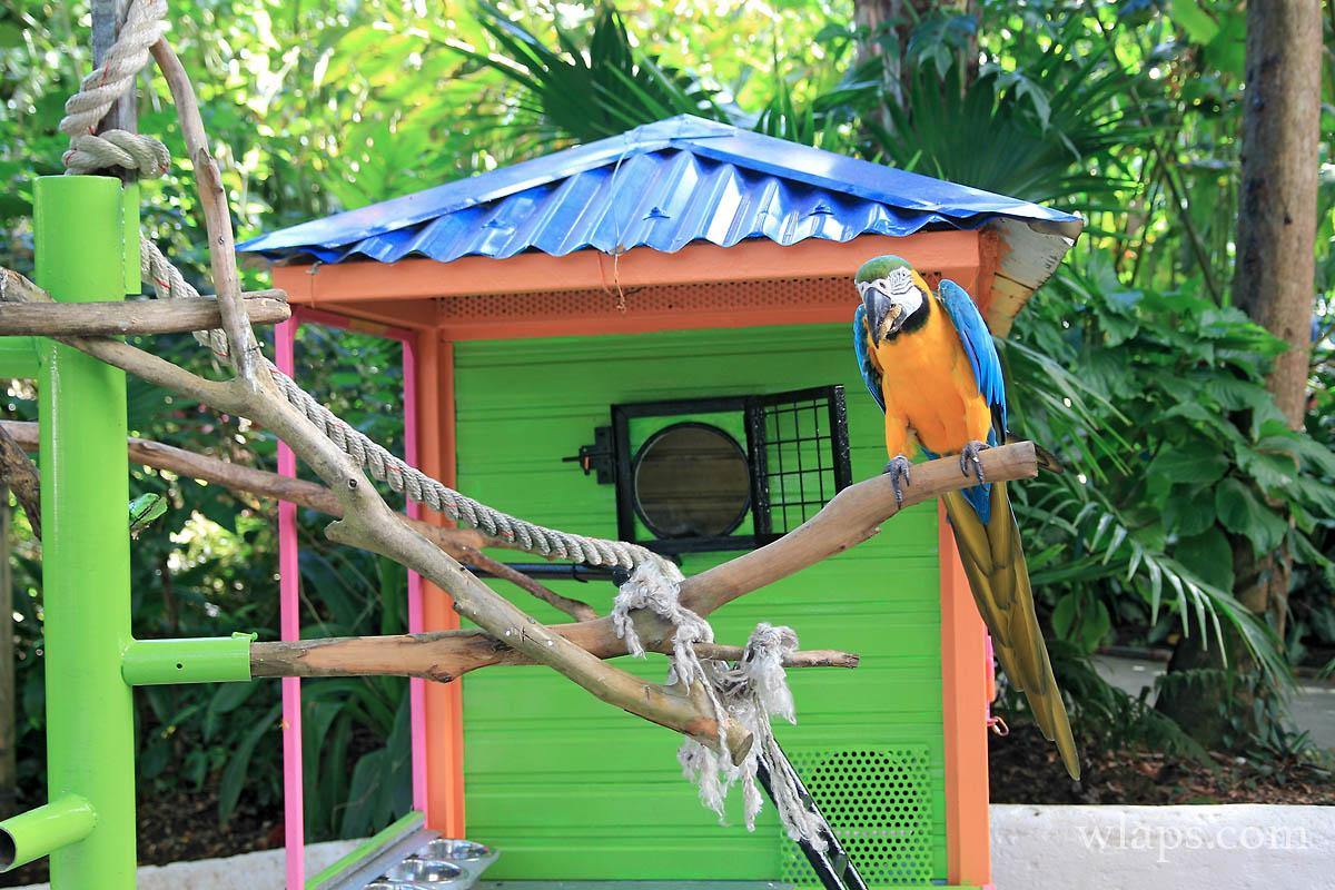 Jardin Botanique Guadeloupe Of Le Jardin Botanique Deshaies Guadeloupe Wlaps