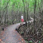 mangrove-port-louis