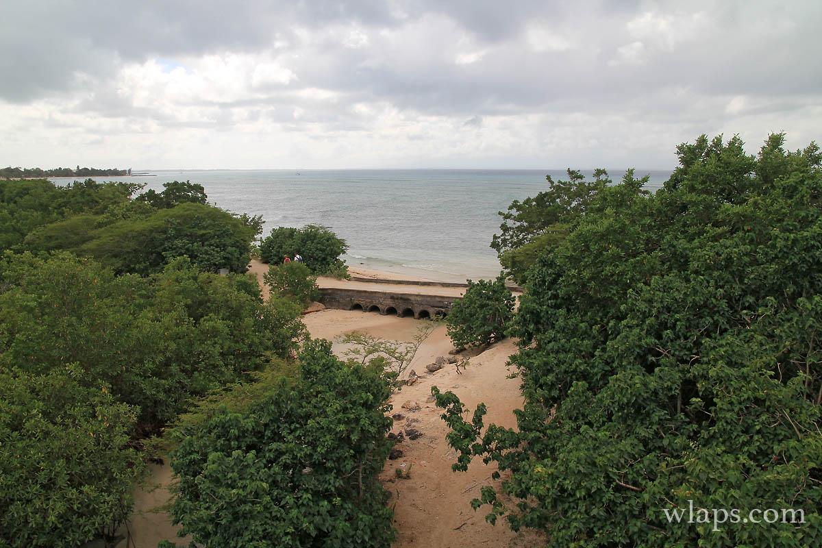 mangrove-port-louis-debut