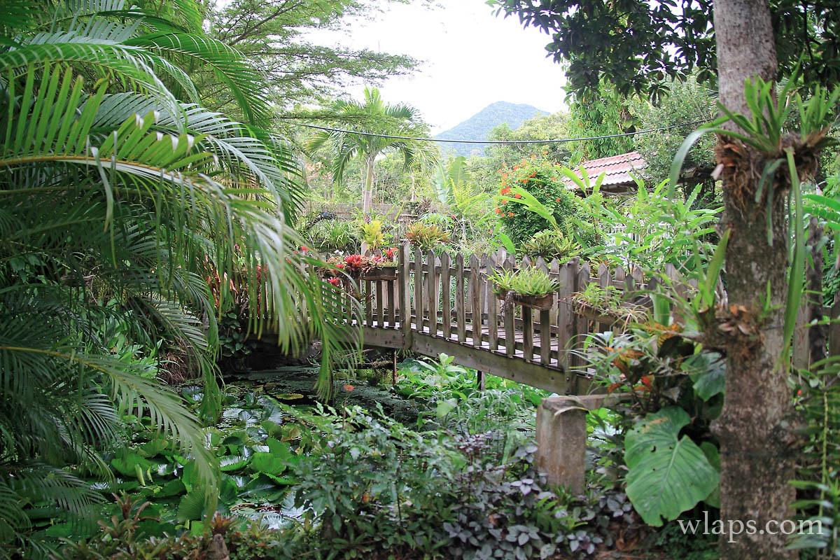 parc-aux-orchidees-pointe-noire-guadeloupe