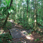 passage-foret-humide-guadeloupe