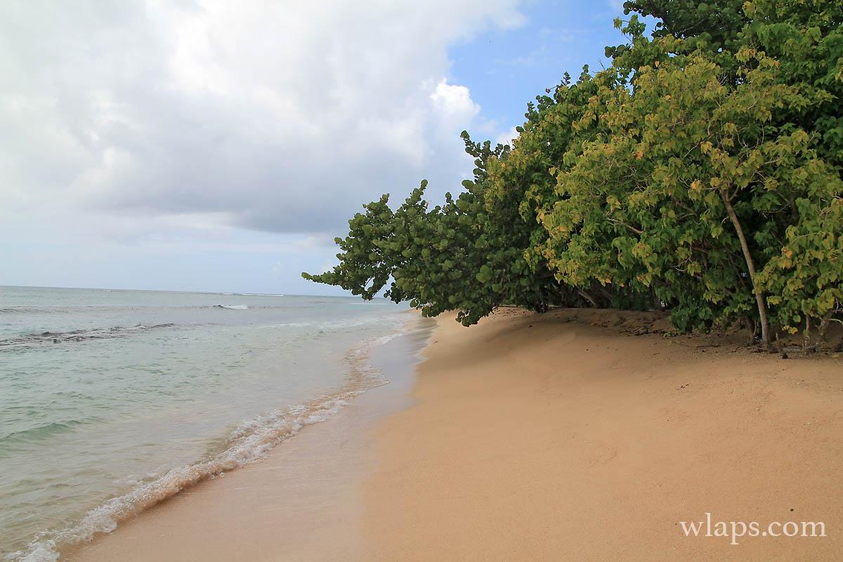 plage-anse-du-souffleur-grande-terre-guadeloupe