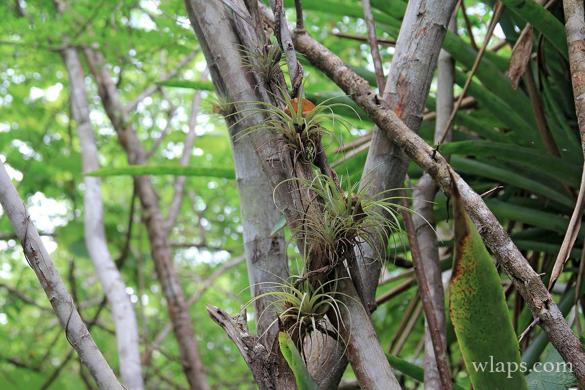 plantes-accrochees-marais