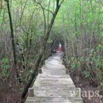 randonnee-mangrove-guadeloupe-basse-terre