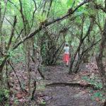 randonnee-mangrove-port-louis