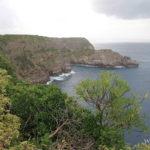 vegetation-caraibes-foret-seche
