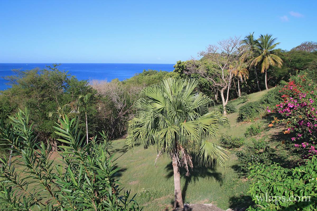 vegetation-deshaies-guadeloupe