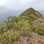 vegetation-foret-seche