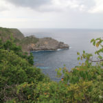 vegetation-foret-seche-guadeloupe