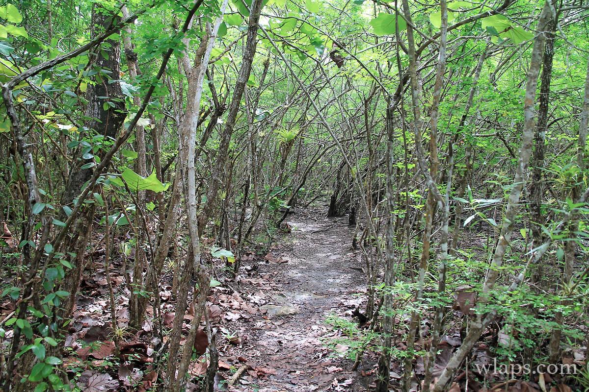 vegetation-marais-port-louis-guadeloupe
