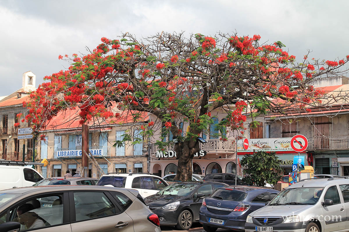 ville-basse-terre-guadeloupe-flamboyant