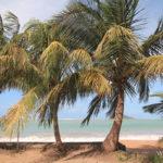 1-plage-anse-rifflet-basse-terre-guadeloupe
