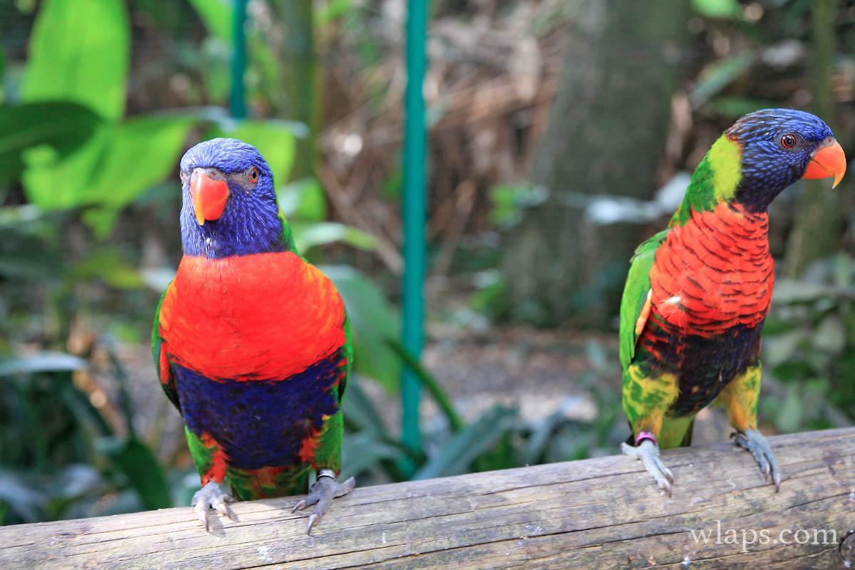 3-le-jardin-botanique-deshaies-guadeloupe