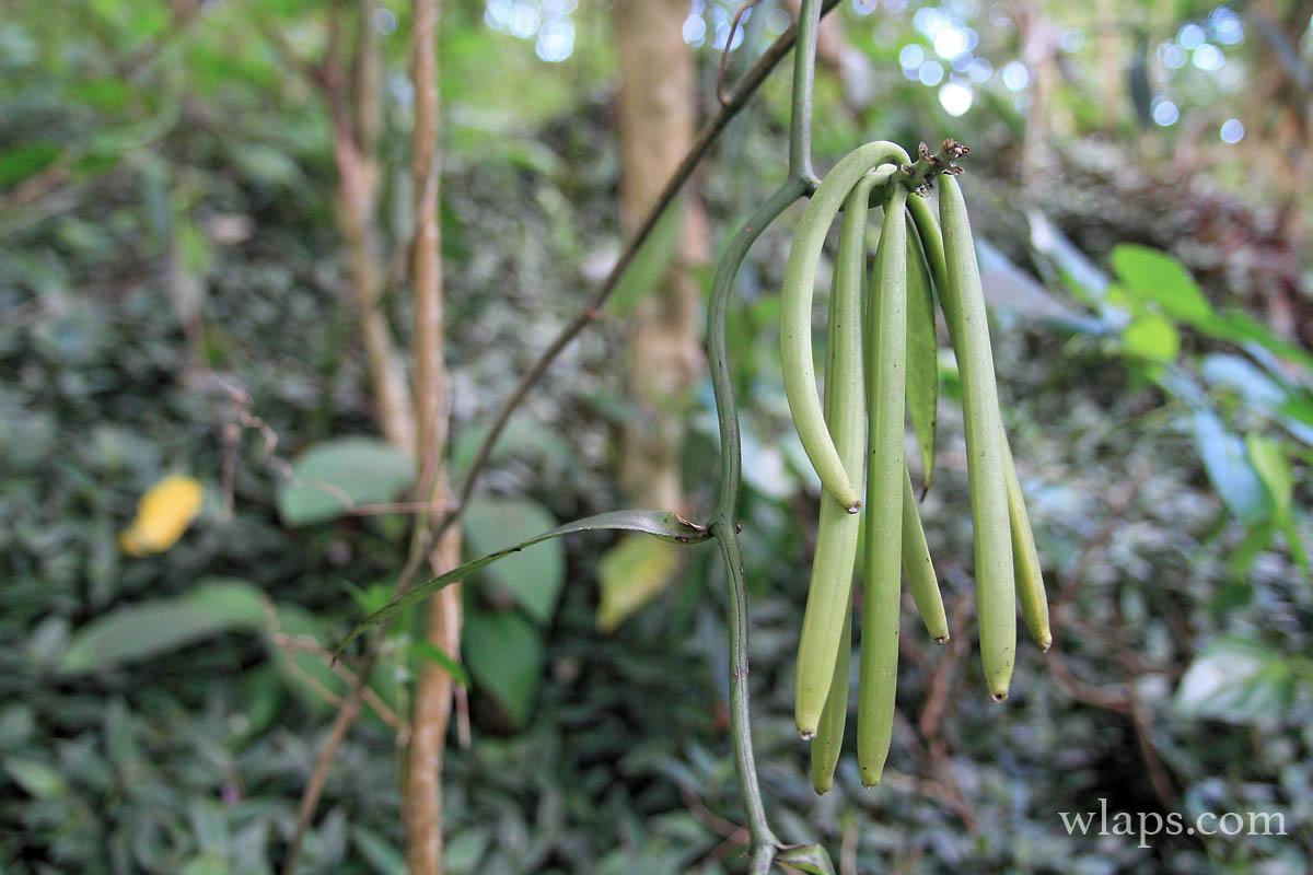 6-avis-domaine-vanibel-plantation-cafe-vanille-guadeloupe
