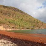 6-sur-plage-pompierre-iles-les-saintes-guadeloupe