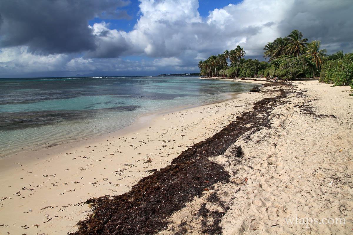 4-belle-plage-de-bois-jolan-grande-terre-guadeloupe