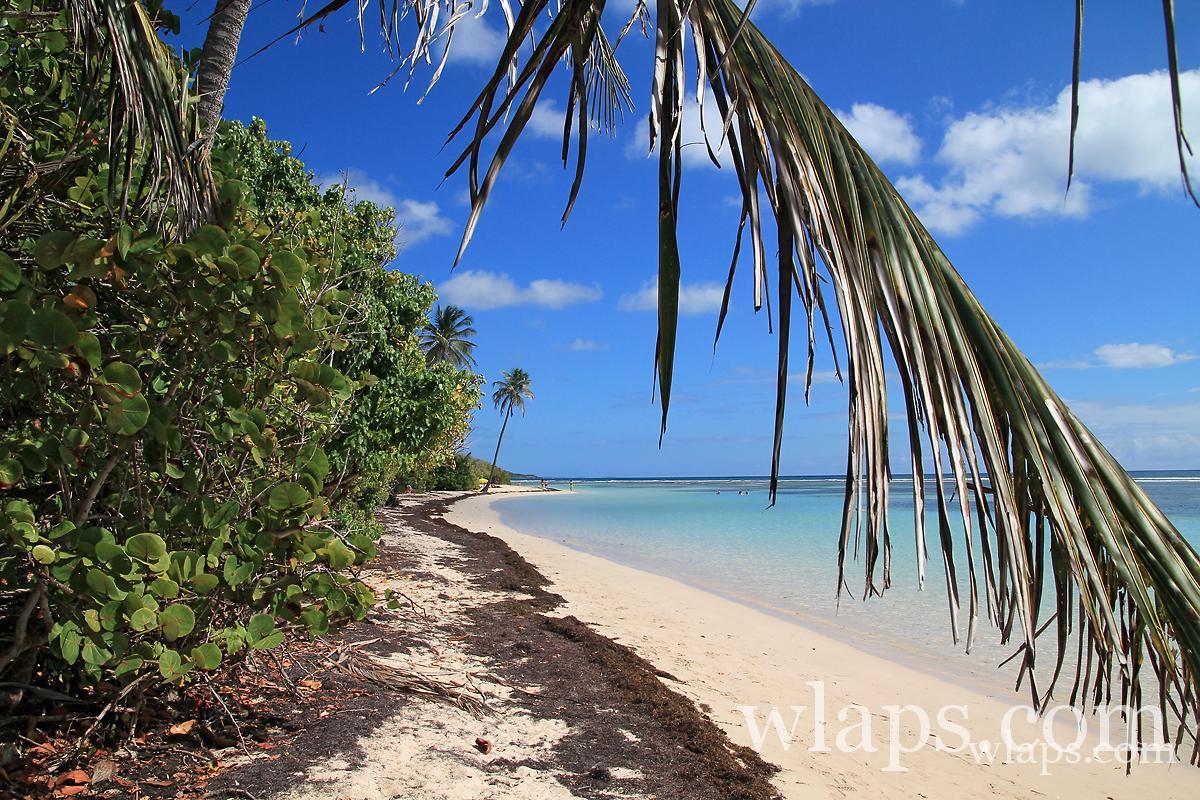 belle-plage-de-bois-jolan-grande-terre-guadeloupe